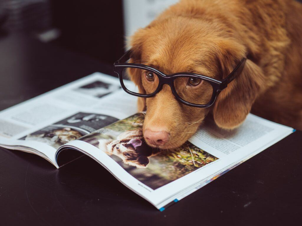 Best Cannabidiol CBD for dogs and cats